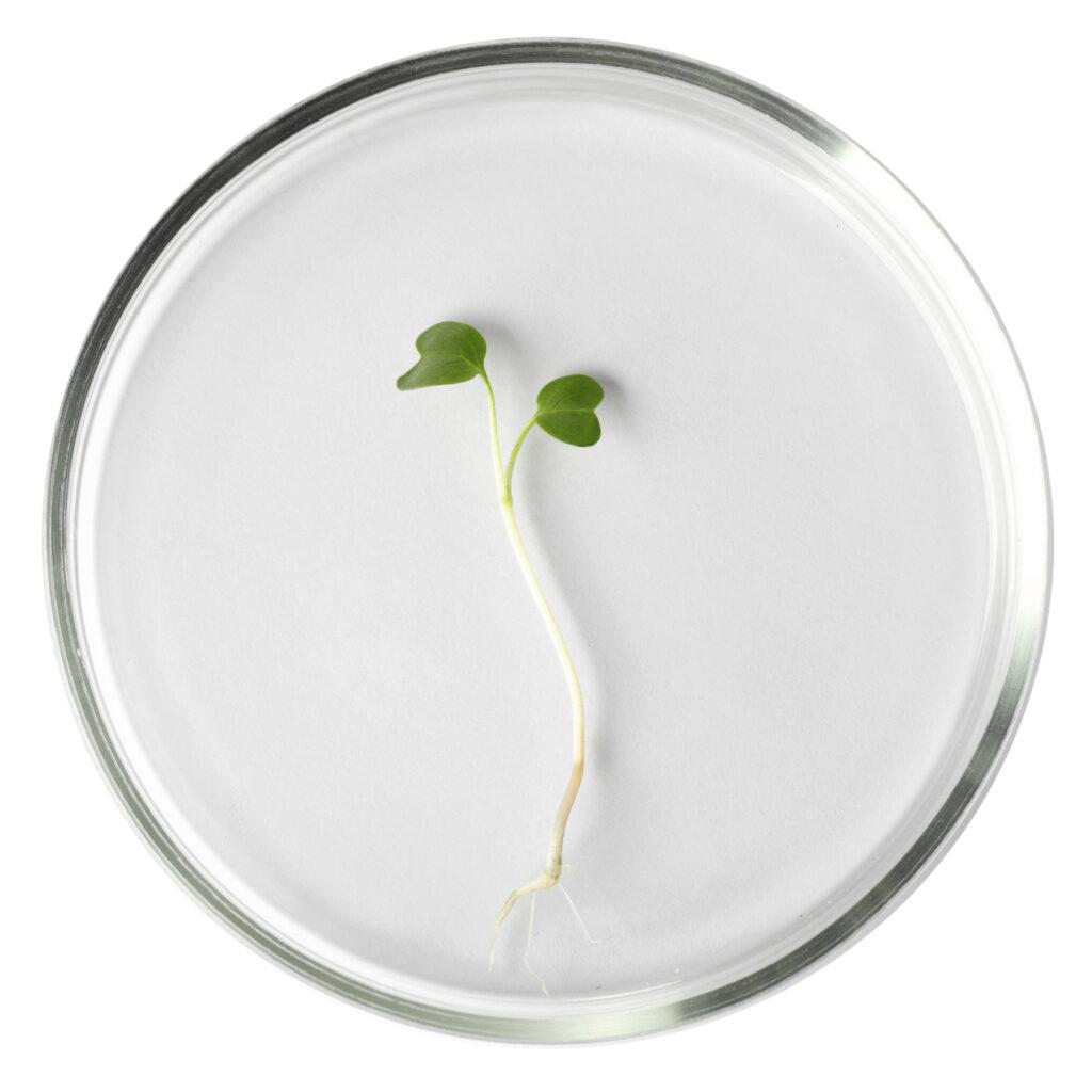 Functional Medicine petri dish