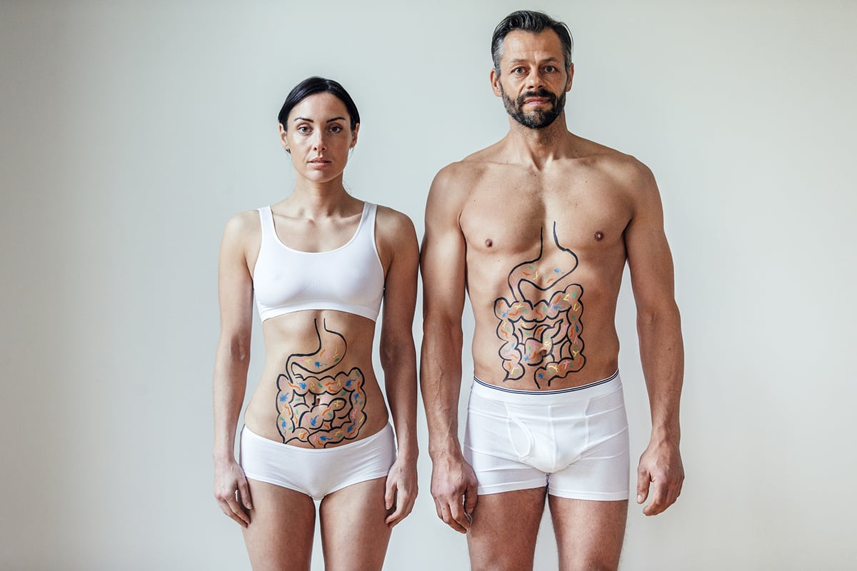 male and female digestive system (gut)